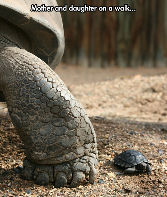 funny-tortoise-giant-foot-baby