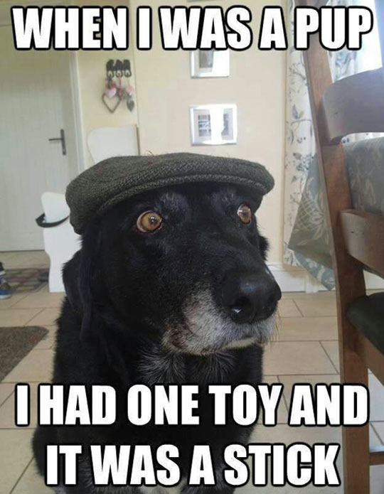 funny-toy-stick-old-dog-puppy