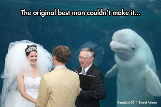 Something old, something new, something borrowed, something Beluga…