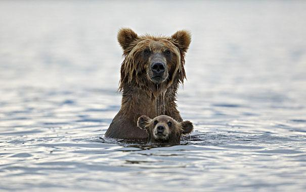 Animals With Their Adorable Miniature Versions Might Be The - 30 animals cutest parents