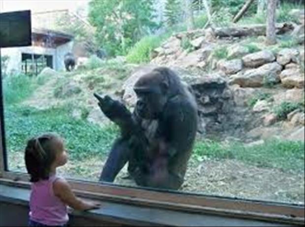 monkey-flipping-you-off