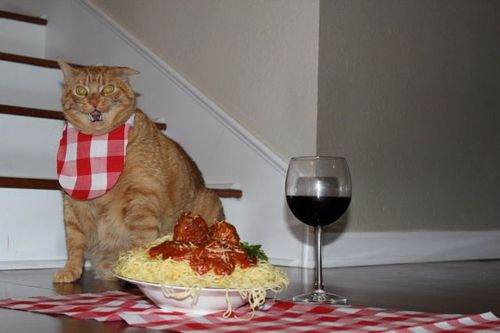 spaghetti-garfield-cat-9fwMl