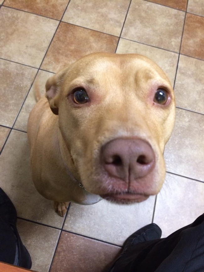 the-most-terrified-dogs-at-the-vet-their-expressions-are-priceless-lol-18