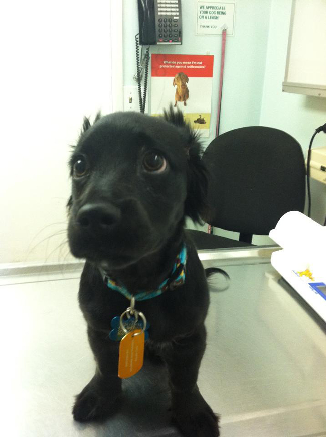 the-most-terrified-dogs-at-the-vet-their-expressions-are-priceless-lol-2