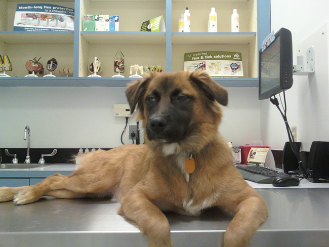 the-most-terrified-dogs-at-the-vet-their-expressions-are-priceless-lol-22