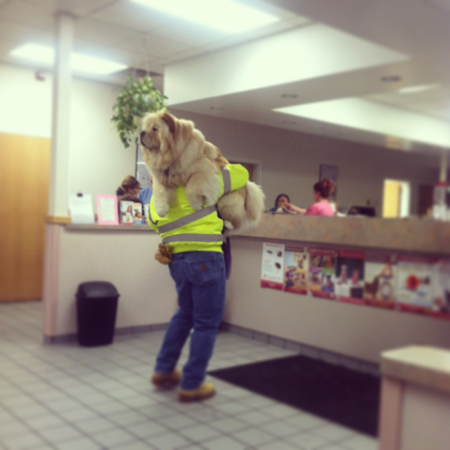 the-most-terrified-dogs-at-the-vet-their-expressions-are-priceless-lol-8