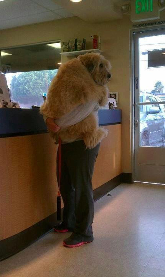 the-most-terrified-dogs-at-the-vet-their-expressions-are-priceless-lol-9