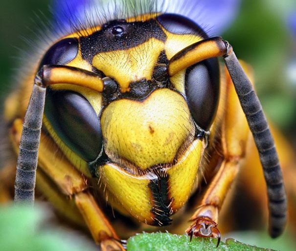 20-Incredible-Eye-Macros-bee