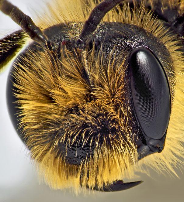 20-Incredible-Eye-Macros-bee2