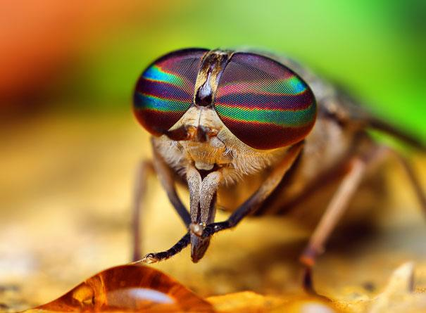 20-Incredible-Eye-Macros-horse-fly