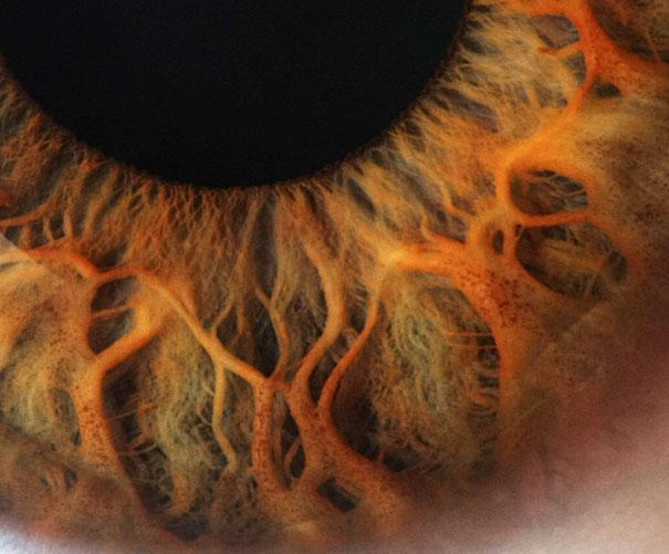 20-Incredible-Eye-Macros-human