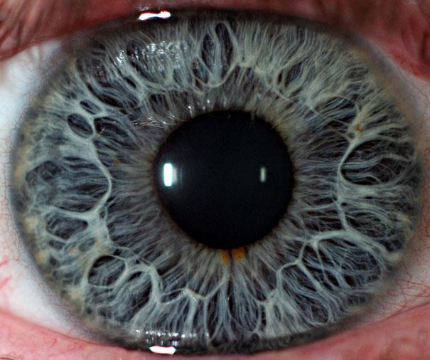 20-Incredible-Eye-Macros-human2