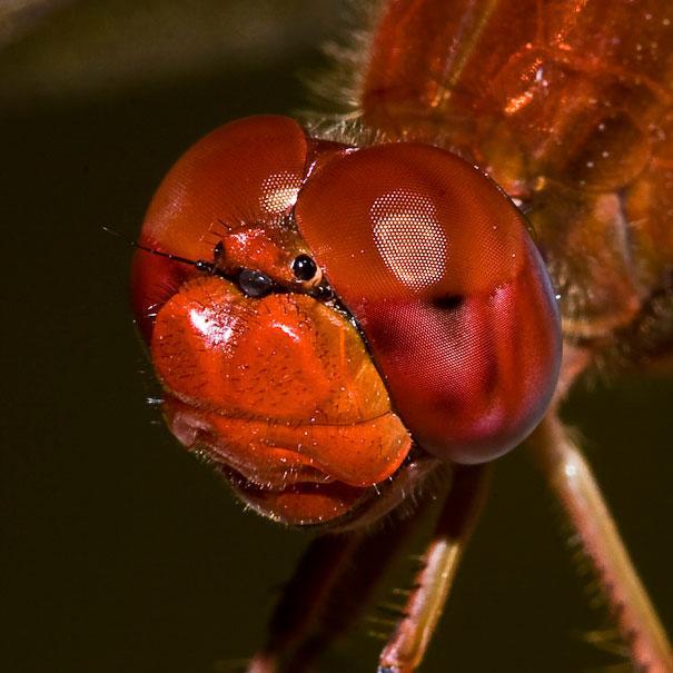 20-Incredible-Eye-Macros-scarlet