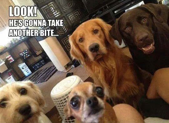 Dog Owners Become Celebrities Every Meal Time