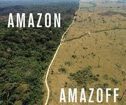 cool-Amazon-tree-sad-forest