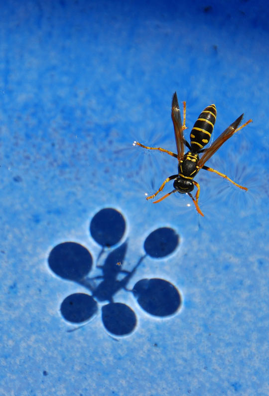 cool-bug-water-surface-shadow