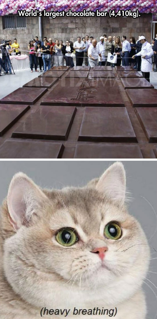 cool-chocolate-largest-bar-cat-breathing