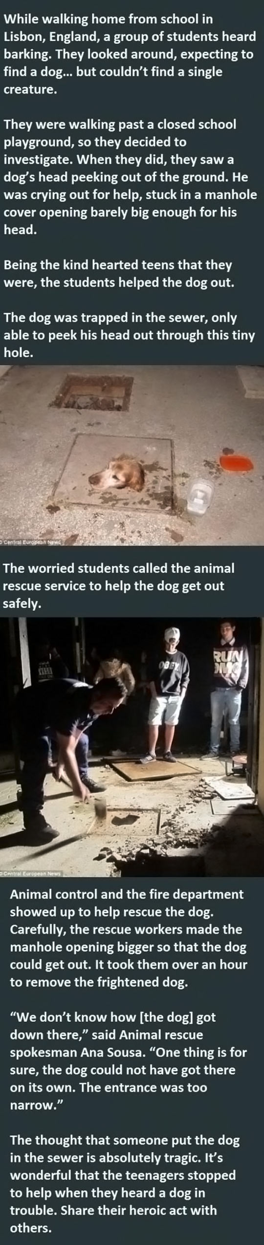 cool-dog-story-students-help