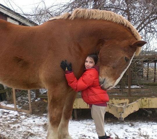 cool-giant-horse-hug-little-girl