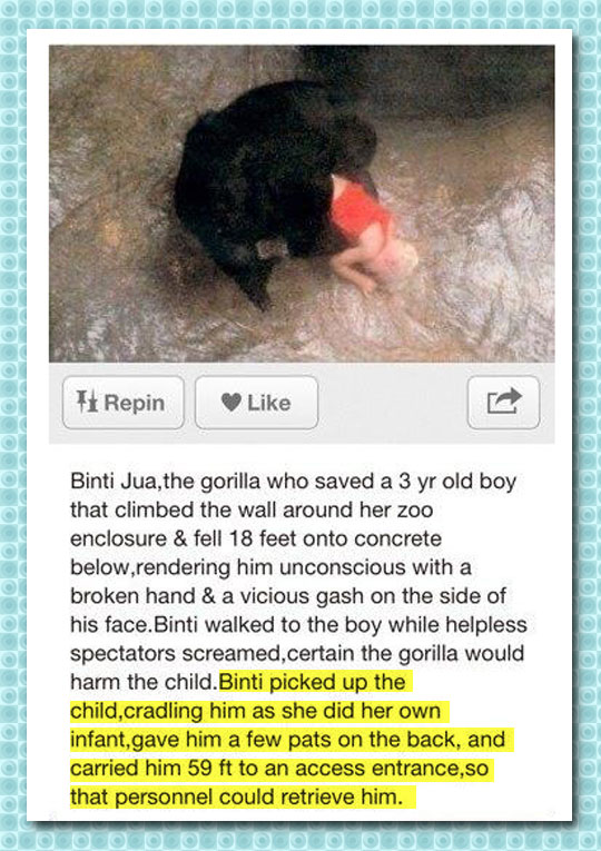 cool-monkey-saving-kid-life-zoo