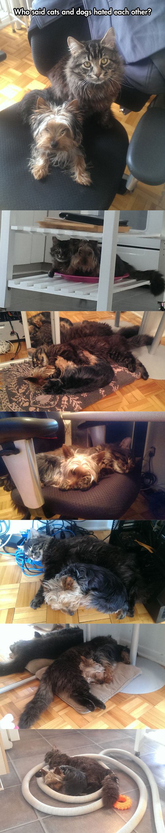 cute-cat-dog-friends-brothers-pets