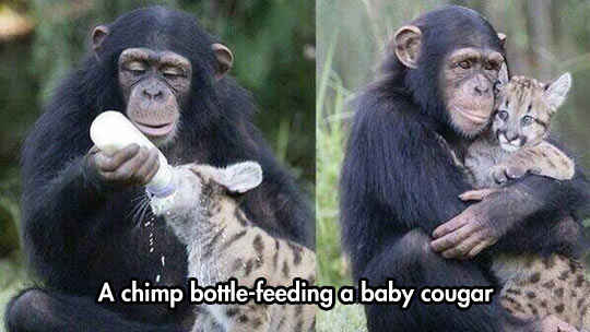 Sometimes Animals Show Us The True Meaning Of Love