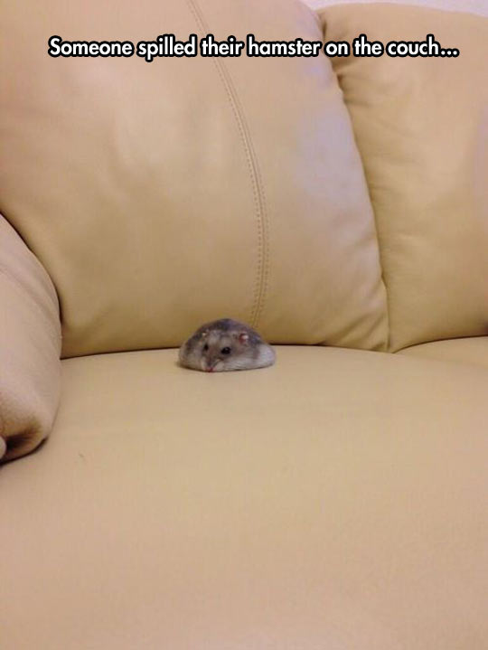 cute-fluffy-hamster-couch-cushion-seat