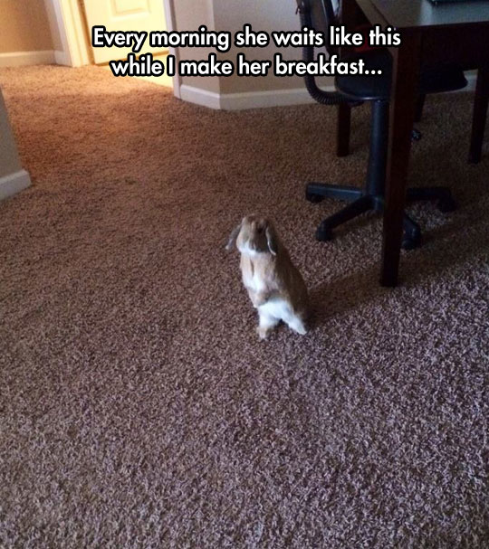cute-rabbit-waiting-food-living-room