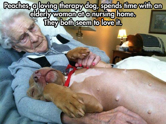 cute-therapy-dog-elderly-woman