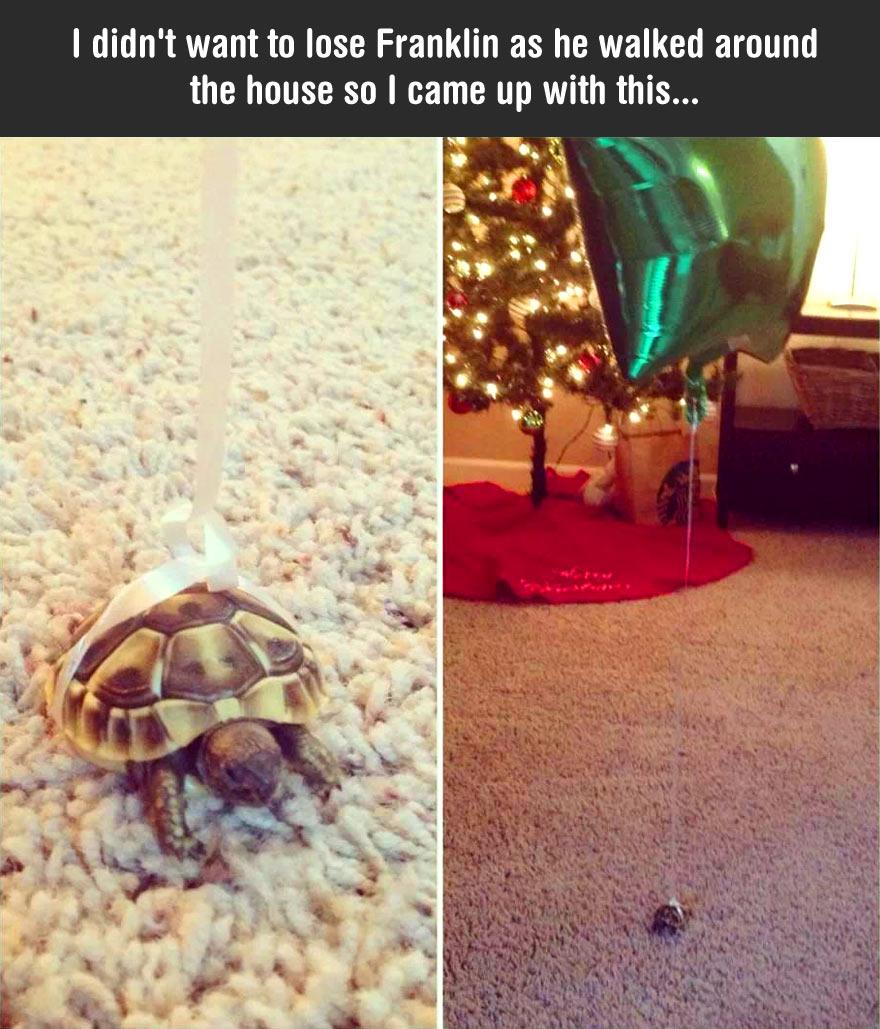 cute-tortoise-balloon-birthday-house