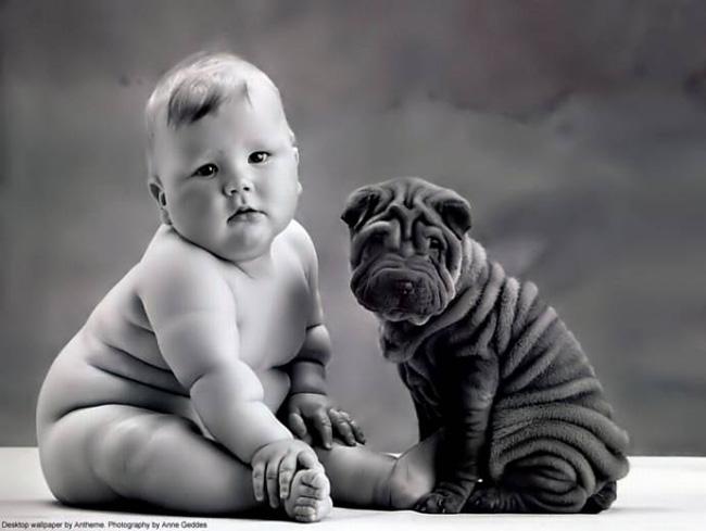 dog_looks_like_owner_04