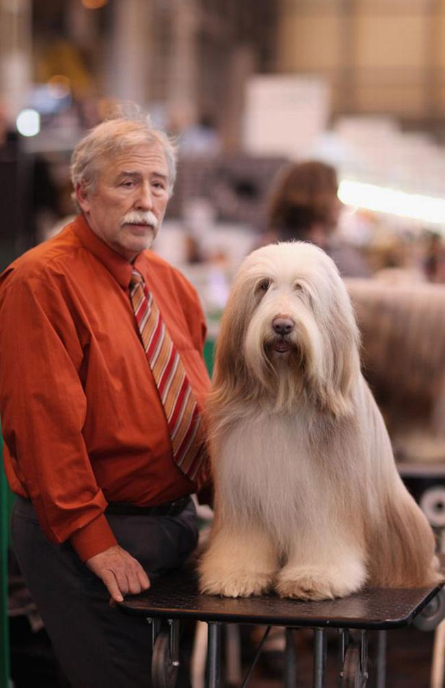 dog_looks_like_owner_12