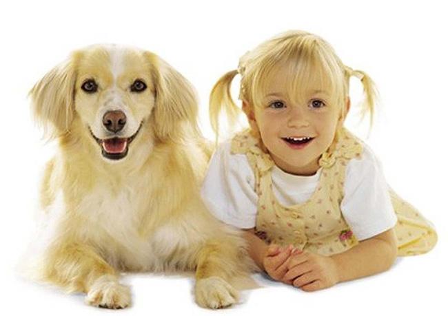 dog_looks_like_owner_15