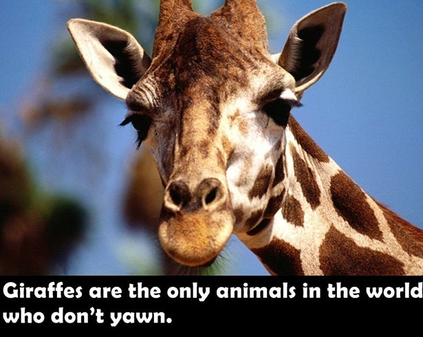 fun-facts-006-04022014