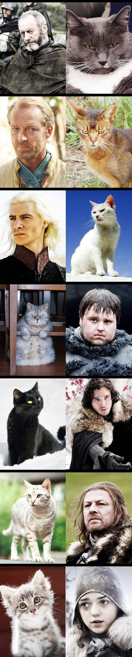 funny-Game-Thrones-cat-people