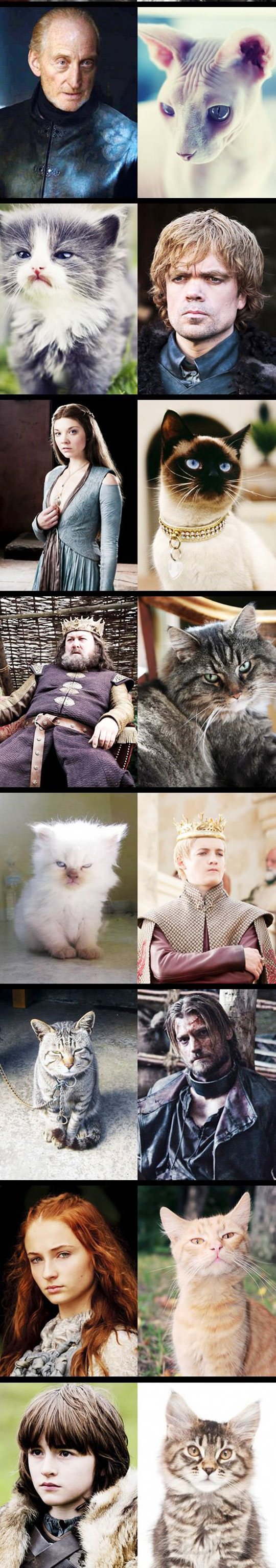 funny-Game-Thrones-cats-Stark