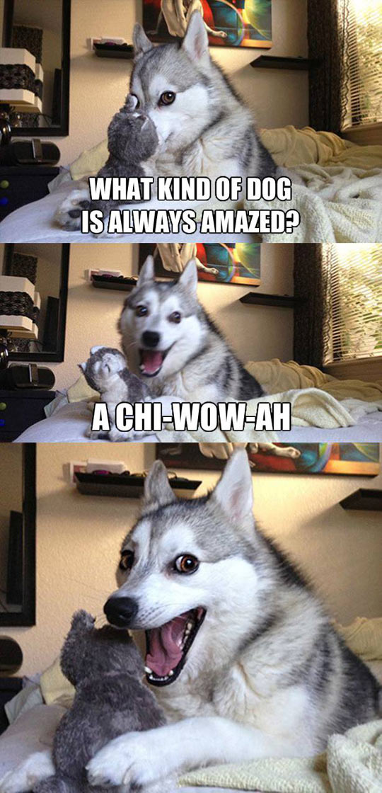 The Kind Of Dog That Is Always Amazed