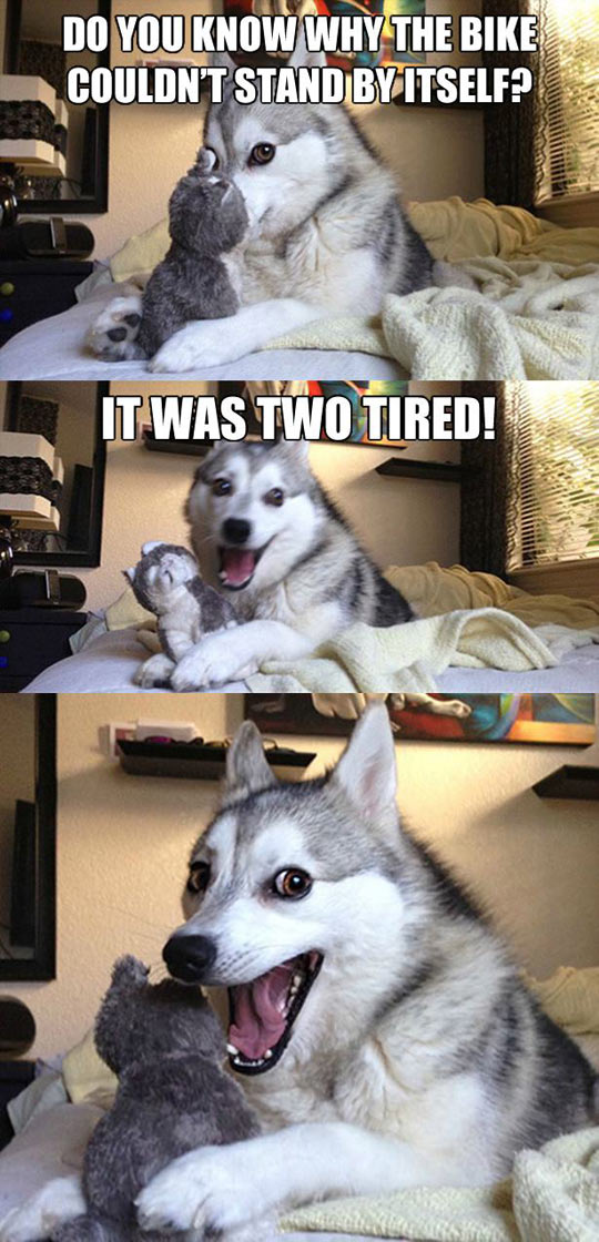 funny-Husky-joke-doge-tired