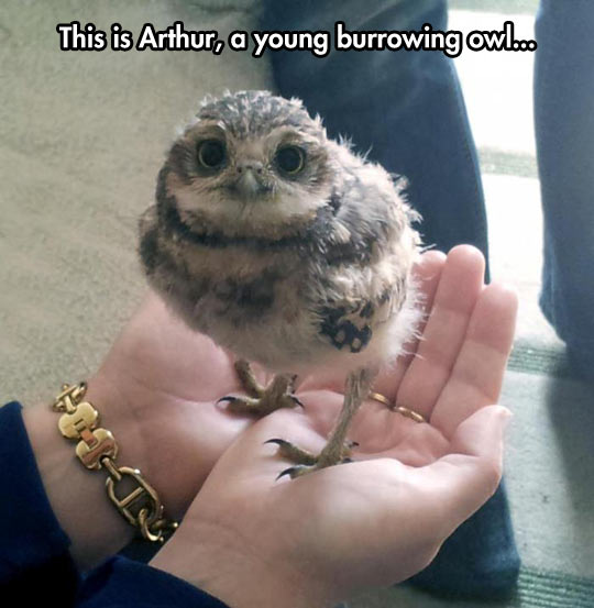 Excuse Me, Owl Be Petting Him Forever