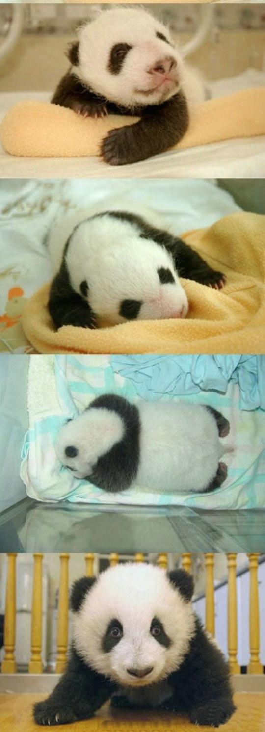 funny-baby-panda-newly-born-crib