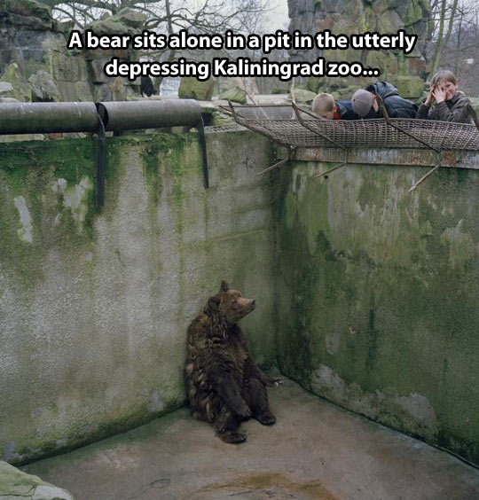 funny-bear-alone-zoo-sitting