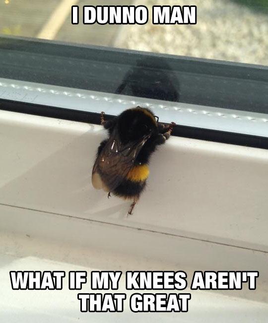 Poor Little Bee