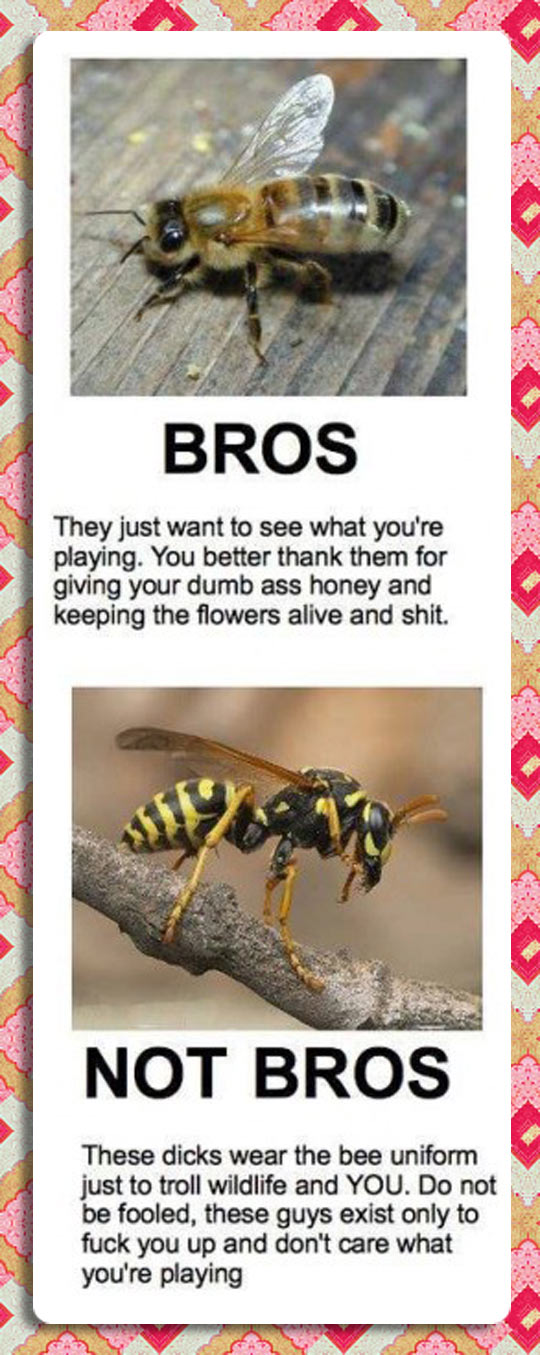 Buzz Kill Of Nature