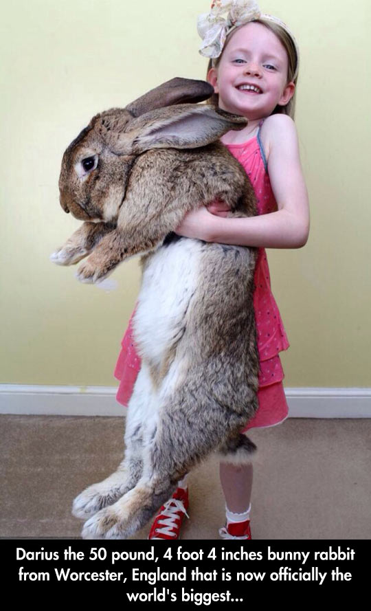 funny-biggest-bunny-little-girl