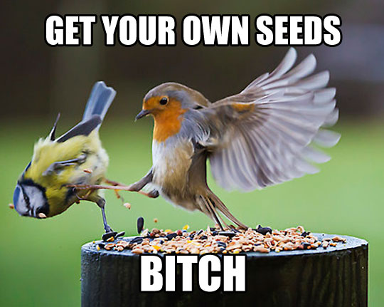 funny-bird-fighting-seeds-outdoors