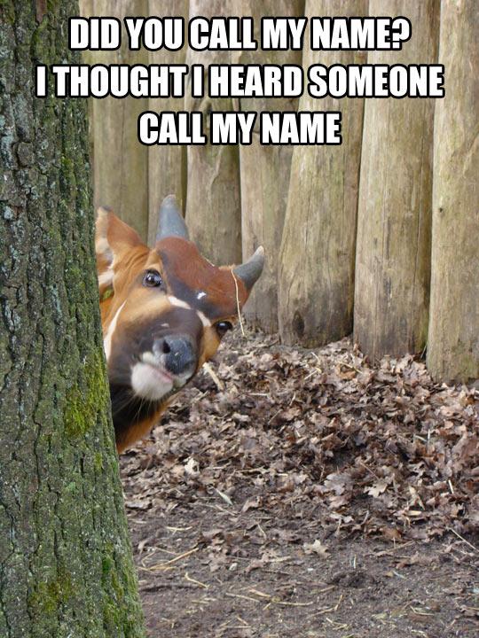 funny-bongo-antelope-looking-hide-tree