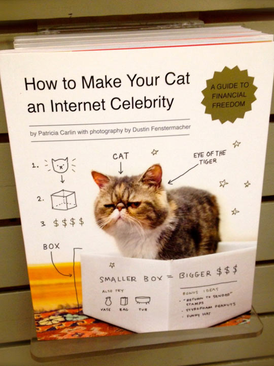 funny-book-cat-Internet-guide
