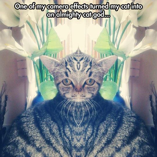 Cat God