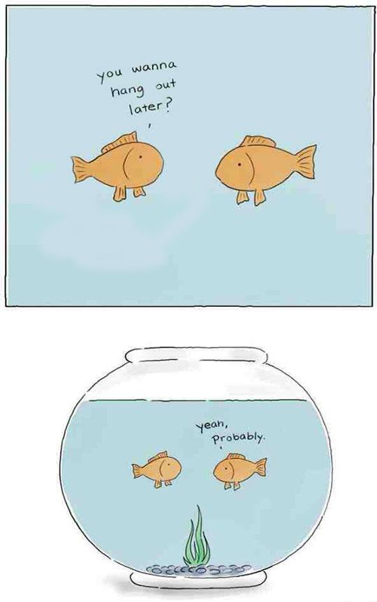 funny-cartoon-fish-bowl-hang-out
