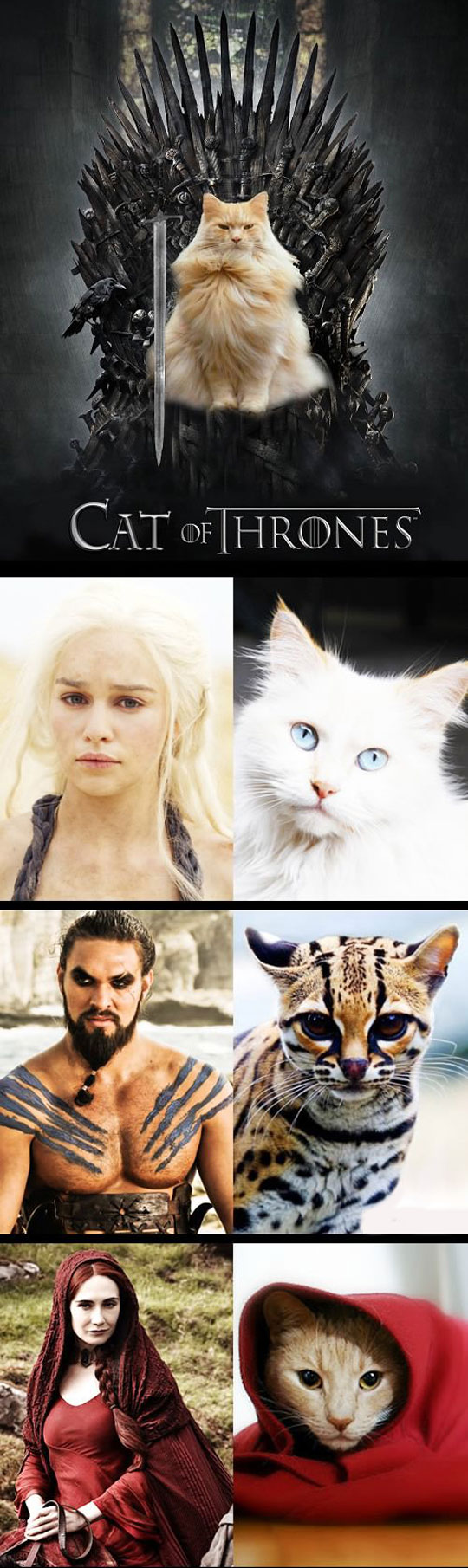 funny-cat-Game-Thrones-characters